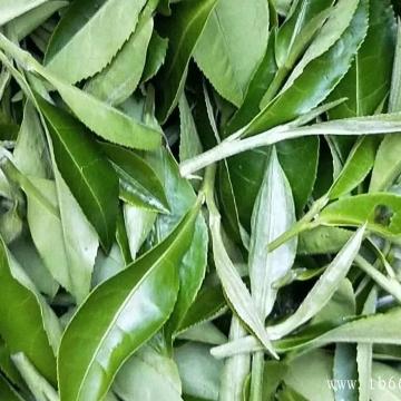 白茶的种类品质!白茶的功效有哪些?