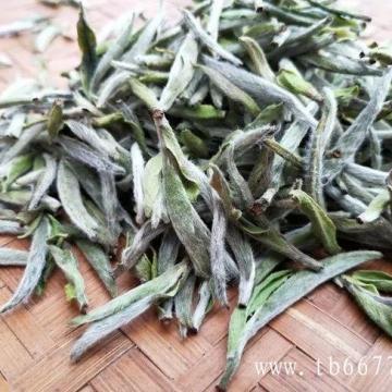 陈香——是老白茶最基础的香气