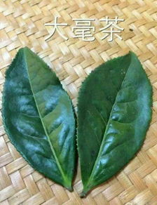 春白茶的鲜嫩使其对水温有一定要求。