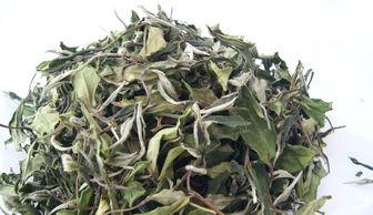 白茶圈里新鲜事,冲泡白牡丹要将沸水晾至90℃?