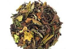 福鼎白茶的荒山野茶