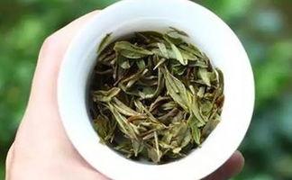 喝春白茶,非白毫银针不可吗?