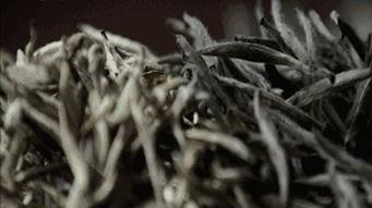 作为一个白茶新茶友,入门是白牡丹还是寿眉?这篇文章让你告别纠结