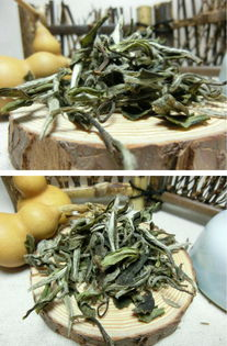 春白茶为什么贵,营养价值高?
