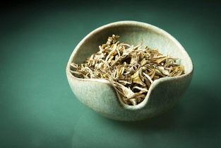 茶圈又出新套路,广东仓老白茶现世,盲目套用普洱概念有意义吗?