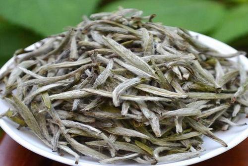 福鼎白茶是买大品牌还是买小厂家