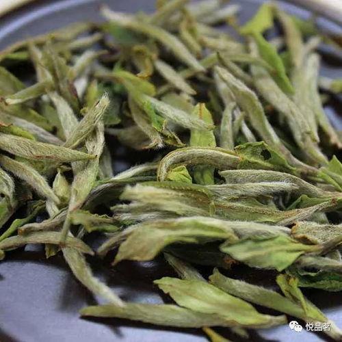 白茶喝得急,越喝越口干是怎么回事?茶叶品质不好吗?