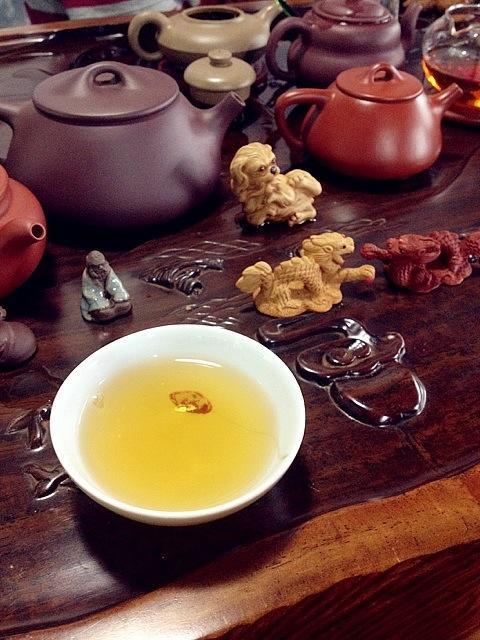 福鼎白茶春茶和秋茶哪个好