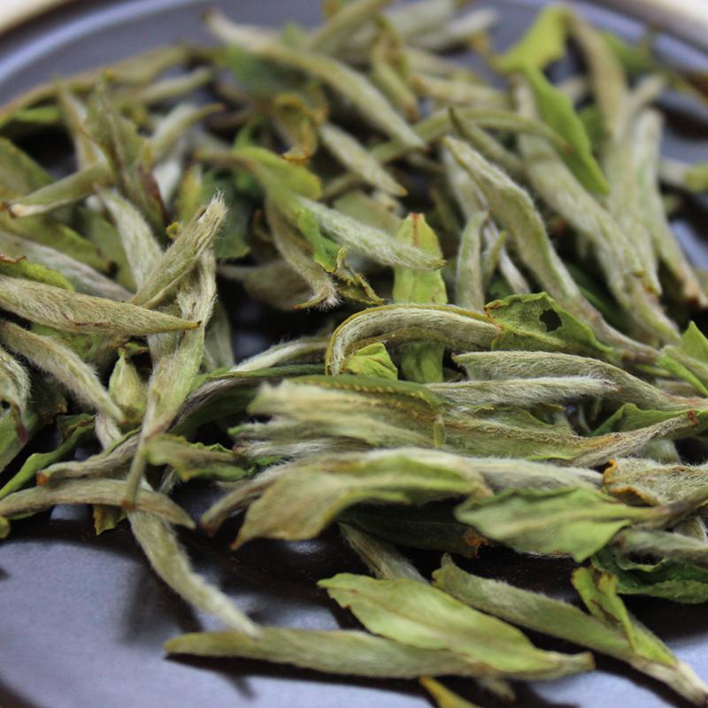 福鼎白茶是凉性吗