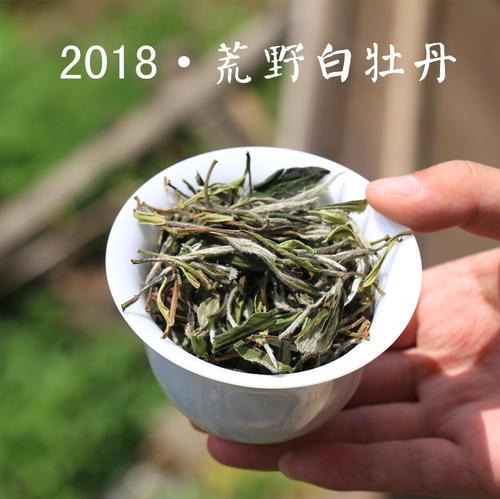 初春煮老白茶,冷水投茶还是热水投茶,哪种方式更胜一筹?