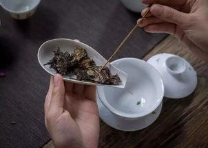 安溪白茶是属于什么茶啊?