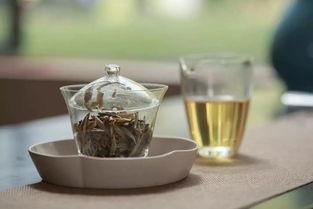 带你走进白茶的生产地!