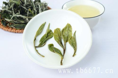 福鼎白茶对寿眉的影响,有哪些?