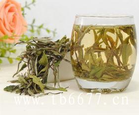 福建老白茶,能提高人们的睡眠质量?