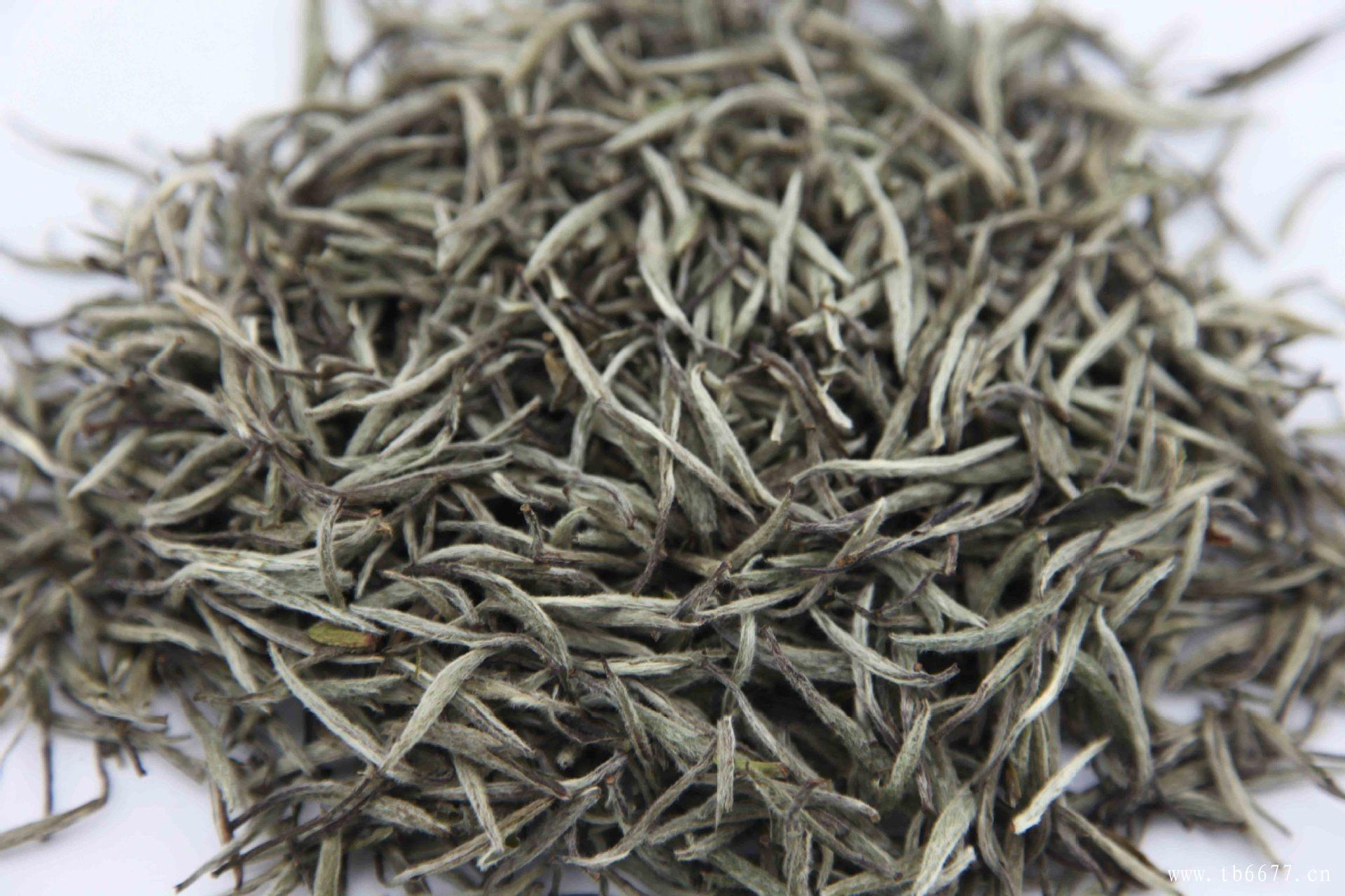 白牡丹属于什么茶呢?