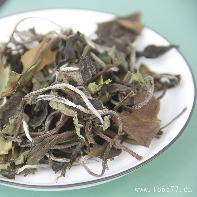 福鼎白茶的新茶不洗、老茶要醒!