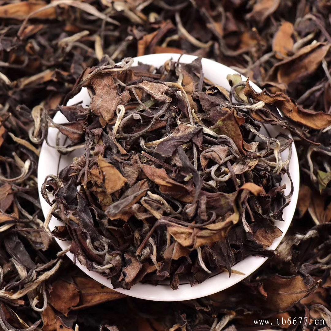 安吉白茶跟福鼎白茶,它们之间的区别在哪里?