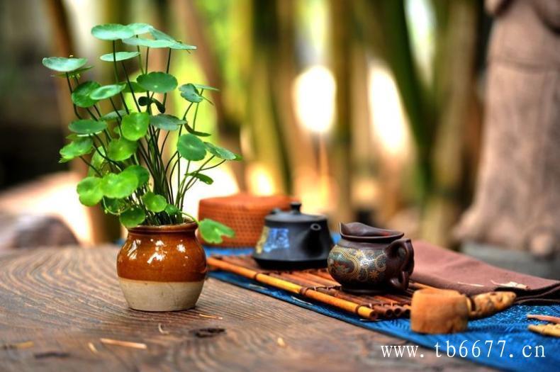 福鼎白茶的煮茶法,绝对值得一试!