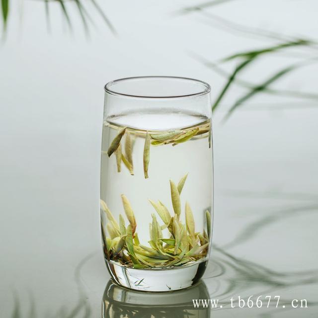 5个理由,告诉你春天为什么喝白茶?