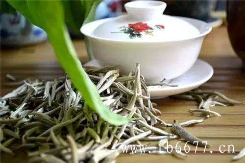 我们一起来看看,白茶饼是如何制造出来的?