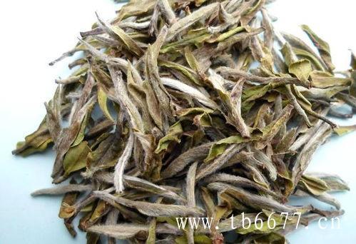 白茶种的代表——四大茶类优劣式